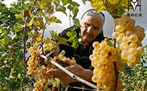 格鲁吉亚1-11月份葡萄酒及酒精饮料出口情况