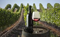中国食品2017半年报:长城葡萄酒销售额跌8%
